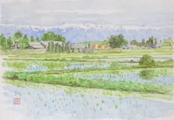 安曇野深緑(2)
