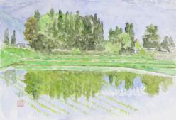 安曇野深緑(3)