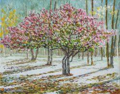 紅葉樹のある白樺林